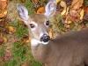 Cute Deer_Photo by Bruce Brandli